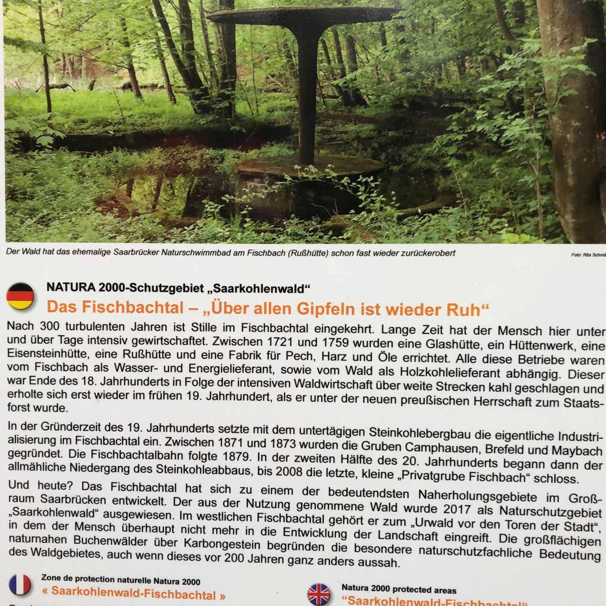 Pilzsuche, ehemaliges Naturbad Saarbücken